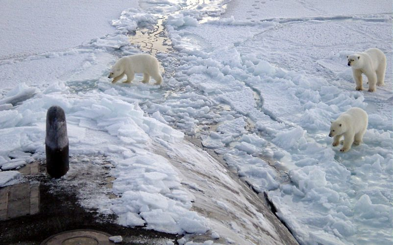 Arctic Circle (Oct. 2003) -- Three Polar bears approach the starboard bow of the Los Angeles-class fast attack submarine USS Honolulu (SSN 718) while surfaced 280 miles from the North Pole.   Sighted by a lookout from the bridge (sail) of the submarine, the bears investigated the boat for almost 2 hours before leaving.  Commanded by Cmdr. Charles Harris, USS Honolulu while conducting otherwise classified operations in the Arctic, collected scientific data and water samples for U.S. and Canadian Universities as part of an agreement with the Artic Submarine Laboratory (ASL) and the National Science Foundation (NSF).  USS Honolulu is the 24th Los Angeles-class submarine, and the first original design in her class to visit the North Pole region.  Honolulu is as assigned to Commander Submarine Pacific, Submarine Squadron Three, Pearl Harbor, Hawaii.  U. S. Navy photo by Chief Yeoman Alphonso Braggs.  (RELEASED)