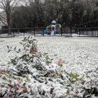 Snowfall in Alexandria VA Photo: Views and News