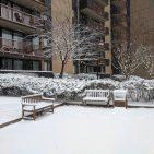 Snowfall in Alexandria Virginia Photo: Views and News